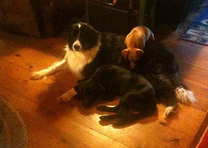 dog-pileup-sm